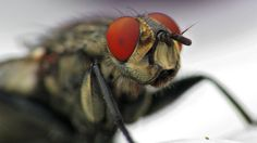 Flys eyes macro [1920x1080] Need #iPhone #6S #Plus #Wallpaper/ #Background for #IPhone6SPlus? Follow iPhone 6S Plus 3Wallpapers/ #Backgrounds Must to Have http://ift.tt/1SfrOMr