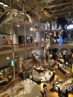 National Museum of Scotland - Fantastic place to spend the day, excellent for the kids and even grandparents. History ,geography and prehistoric sections, photos galore. Free entrance and easy to get to