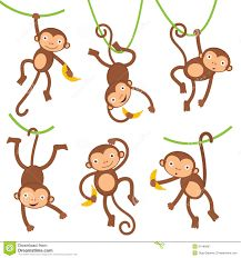 Image result for cute monkeys