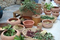 toscana herbal
