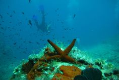 Lesvos island, Aegean Archipelago, Greece, Scuba & Alternative Sailing