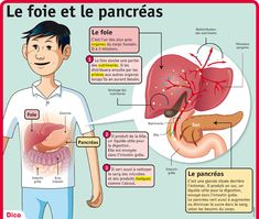 PlayBac Presse Medical Humor, Medical School, French Education, Art Education, Medicine Student, Body Anatomy, Naturopathy, Body Systems, Teaching
