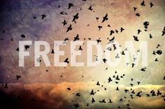 Freedom...i love the birds in te back this would be a good simple tattoo