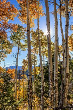 Fall Aspens (Colorado) by Richard Hahn on 500px