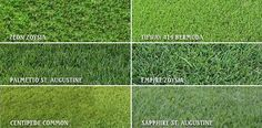 With all of the different varieties of lawn grass available today, choosing the right one can be confusing. At Andy's we can helo you choose the right type for your specific conditions, ensuring that your lawn thrives for years to come! Growing Grass From Seed, Best Grass Seed, How To Grow Grass, How To Lay Sod, Zoysia Sod, Zoysia Grass, Lawn Grass Types, St Augustine Grass, Centipede Grass