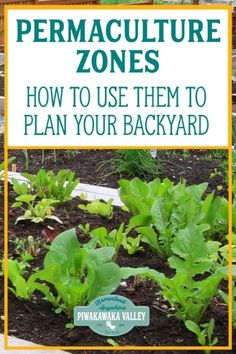 Use permaculture zones to plan your backyard and homestead with these tips on permaculture design piwakawakavalley 6 easy backyard permaculture projects for beginners Permaculture Design, Permaculture Principles, Permaculture Garden, Fall Vegetables, Growing Vegetables, Gardening For Beginners, Gardening Tips, Nitrogen Fixing Plants, Farm Hacks