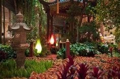 Bellagio Conservatory, Las Vegas, Vegas Lights, Network Solutions, Business Profile, Free Fun, Floral, Photos, Travel