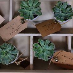 great vancouver florist all the tiny pots. @sprigandtwine @fancythisgifts #shoplocal #succulent by @aliciaolafsson  #vancouverflorist #vancouverflorist #vancouverwedding #vancouverweddingdosanddonts