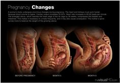 The Beautiful and Efficient Anatomy of Pregnancy