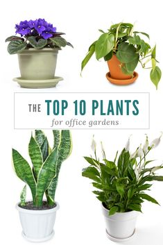 7 Best Low Maintenance Plants For The Office | Other Plants | Pinterest | Low  Maintenance Plants, Plants And Office Plants