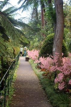 Jardim do Monte -Ilha da Madeira - Situado na Quinta Monte Palace, este Jardim Tropical é constituído por cerca de 100 000 espécies vegetais. Aqui encontramos uma coleção de cicas (encephalartos) que, pela sua idade, são consideradas fósseis vivos.