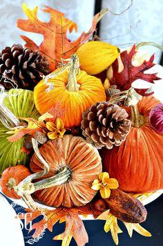 I love velvet pumpkins. Velvet Pumpkins, Fabric Pumpkins, Fall Pumpkins, Thanksgiving Decorations, Seasonal Decor, Holiday Decor, Fall Decorations, Thanksgiving 2017, Holiday Ideas