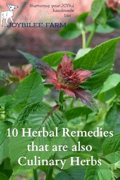 10 Herbal Remedies t
