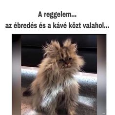 Coffee Love, Coffee Break, Animals And Pets, Funny Animals, Type O Negative, Percy Jackson Memes, Funny Video Memes, Laughing So Hard, Cute Cats