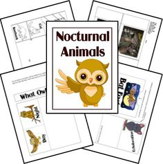 Owl Moon - Nocturnal Animals Unit Study Lesson Plan and Lapbook Printables FREE Kindergarten Science, Science Classroom, Owl Classroom, Science Fun, Classroom Crafts, Science Ideas, Montessori, Animal Activities, Preschool Activities
