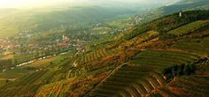 Weingut Loimer, Austria. #vineyards