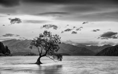 That tree Photo by Alexander Novickov — National Geographic Your Shot