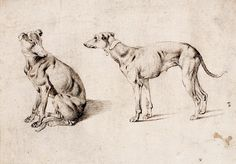 Sinibaldo Scorza, Studies of a Greyhound (detail), c. 1607, pen and black and brown inks on cream antique laid paper, The Suida-Manning Collection, Blanton Museum.