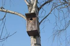 Bauanleitungen und wichtige Tipps zum Aufhängen von Nistkästen und Nisthilfen für Vögel, Fledermäuse und Insekten. Einfach selbst machen! Von den LBV-Experten.
