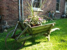 Old wheelbarrow to hold flowers