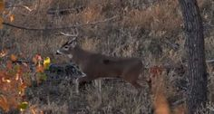 Check Out This Impressive (and Extensive) Deer Bow Kill Compilation - Wide Open Spaces