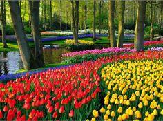 Holanda e suas tulipas *--*