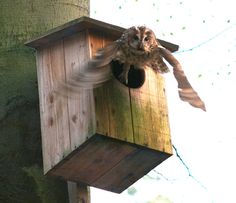 owl+box+plans   Materials & constrn: timber and nails; Attachment: nailed/screwed back ...