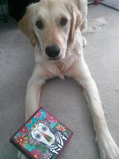 Lola, the Golden Retriever, posing with her RobiniArt portrait, in the Day of the Dead, sugar skull, style. To commission a portrait, visit www.robiniart.com, www.facebook.com/robiniart or www.etsy.com/shop/robiniart. So cute! #art, #design