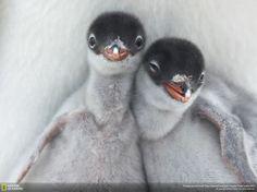 las mejores fotos de animales