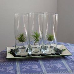 """Tillandsia, or """"air plant,"""" terrarium. I've seen so many awesome ideas with these little plants!"""