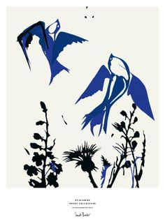 Poster 50 x 70 cm - Birds