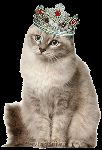 Киса  в короне смайлики картинки