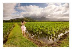Taro Field in Hanalei Valley, Kauai