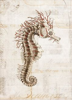 Antique Seahorse Art Collage Print 5 x 7 by 1001treasures, $12.50