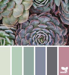 { succulent hues } i