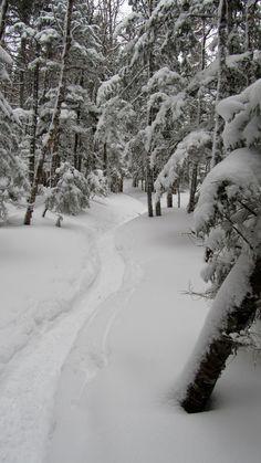 Sentier, mont Jackson, New Hampshire, USA, février 2017 New Hampshire, Jackson, Usa, Outdoor, Pathways, Outdoors, Outdoor Games, The Great Outdoors, Jackson Family