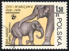 13358470-poland--circa-1978-a-stamp-printed-in-poland-shows-a-elephant-elaphas-maximus--series-zoo-warsaw-192.jpg (1200×882)