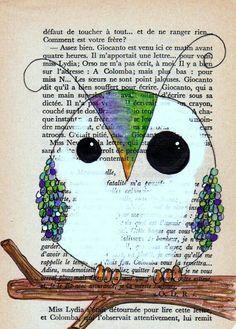 Cingöz baykuş