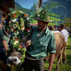 Tolle Bilder vom Alpabzug in Au - Au - Vorarlberg Online