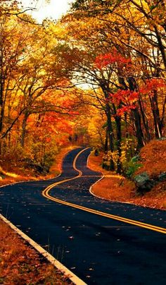 USA Road Trip Ideas and Tips. If you are looking to head out on a road trip, there are a lot of different places you could go. Below, we will be going over some of the top USA road trip Beautiful World, Beautiful Places, Beautiful Pictures, Beautiful Roads, Beautiful Landscapes, Beautiful People, Fall Pictures, Fall Photos, Fall Pics