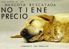 #Rescata #adopta no a la venta de animales