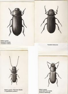 Century-old insect drawings reveal the art of scientific illustration | Visual Arts | Kentucky.com