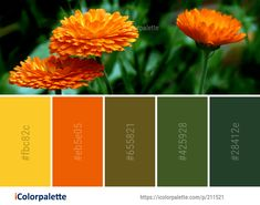 Color Palette Ideas from Flower Orange Wildflower Image Small Flowers, Wild Flowers, Color Combinations, Color Schemes, Orange Color Palettes, Annual Plants, Play Ideas, Computer Wallpaper, Calendula