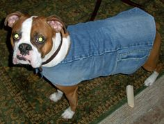 Make a lined denim doggie coat out of an old pair of jeans. Tutorial and pattern