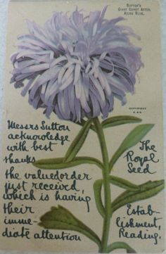 Order acknowledgment from Sutton Seeds Royal Seed Establishment sent in 1906. Postcard shows Sutton's Giant Comet Aster Azure Blue