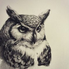 """This great big Great Horned Owl is currently roosting on my drawing board."""