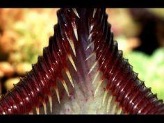 FLESH EATING PLANTS at The National Botanic Gardens of Ireland