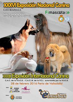 XXXVI Exposición Nacional Canina y XXXIII Exposición Internacional Canina