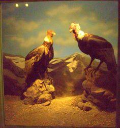 https://flic.kr/p/U6Nqr8   DSC_0028.NEF   Museu da história natural de Santiago do Chile.