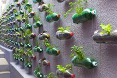 The aesthetics of plastic bottles.